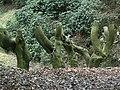 Truncated tree trunks - geograph.org.uk - 1183185.jpg