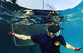 US Navy 110607-N-XD935-192 Navy Diver 1st Class Jimmy Sotelo snorkels on the surface monitoring multinational divers below conducting diving operat.jpg