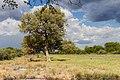 Vägen till Etosha-2129 - Flickr - Ragnhild & Neil Crawford.jpg