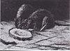 Van Gogh - Zwei Ratten.jpeg