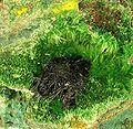 Vandenbrandeite-Cuprosklodowskite-180994.jpg