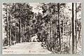 Vanha harjutie, Kuikonniemi, Palovartijan mäki, Pöllänlampi, Mustalahti, Signe Brander 1901 PK0369.jpg