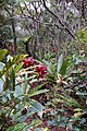 Vanilla plantation, Mucaweng, Lifou, New Caledonia, 2007 (3).JPG