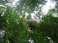 Vegetación de la Reserva de la Biosfera La Amistad Panama (RBLAP) 20.JPG