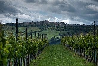 Verdicchio - Verdicchio vines growing in Cupramontana (AN)