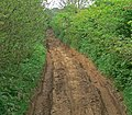 Very deeply rutted track - geograph.org.uk - 808226.jpg