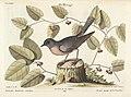 Verzameling van uitlandsche en zeldzaame vogelen (Tab. XCIV) (7894263424).jpg