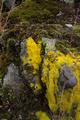 Vogelsberg Schotten Bilstein Summit Lichens Bryophyte Basalt.png