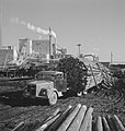 Vrachtwagens, boomstammen, vervoeren, houtindustrie, Bestanddeelnr 253-5259.jpg