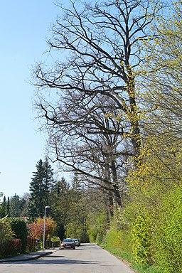 Waldäckerweg in Sindelfingen