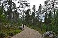 Walking trail, Inari, Finland (12) (35848959424).jpg