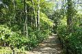 Walkway - Institute for Nature Study, Tokyo - DSC02104.JPG