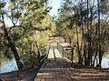 Walkway in Maluga Passive Park.JPG