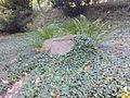 Warszawski Ogród Botaniczny – 26.jpg