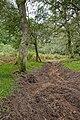 Warwickslade Cutting, stream bed dug out - geograph.org.uk - 1578530.jpg