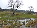 Water-logged paddock - geograph.org.uk - 1637953.jpg