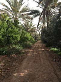 Way in the earth of Allah.jpg