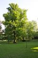 Weilburgpark II.png