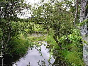 River source - River Wey near its source at Farringdon, Hampshire