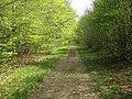 Whitwell Wood - Bondhay Drive - geograph.org.uk - 791272.jpg