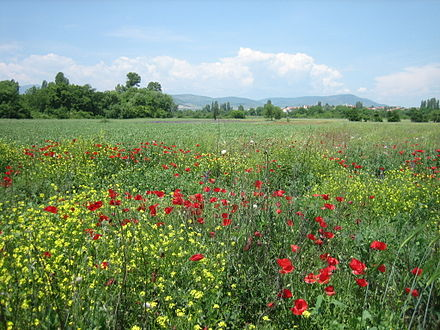 Landscape of the Skopje valley, near Bardovci. Wildflowers of Bardovci12.jpg