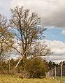 Wildkerend raster. Locatie, Kroondomein 02.jpg