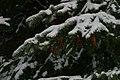 Winter in Western Oregon (23948481075).jpg