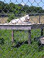 Wolf Park - A - Stierch.jpg