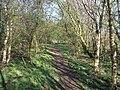 Woodland Footpath - geograph.org.uk - 401093.jpg