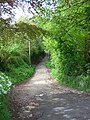 Woodland path near Tirley Farm, Utkinton. - geograph.org.uk - 173234.jpg
