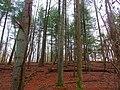 Woodpecker's hangout 2 - panoramio.jpg