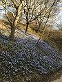 Wow look spring is here.jpg