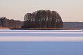Wyspa zimą na jeziorze Isąg w rezerwacie przyrody Ostoja Bobrów na rzece Pasłęce.JPG