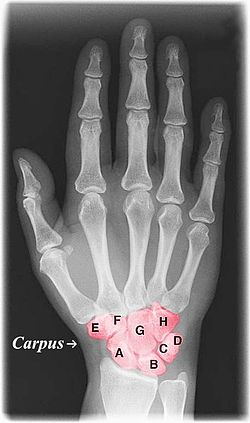 Xray hand with color.jpg
