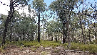 Yarrobil National Park - woodland, two years post fire