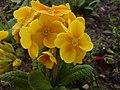 YellowflowerStafford.JPG