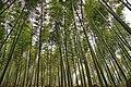 Yixing, Wuxi, Jiangsu, China - panoramio.jpg