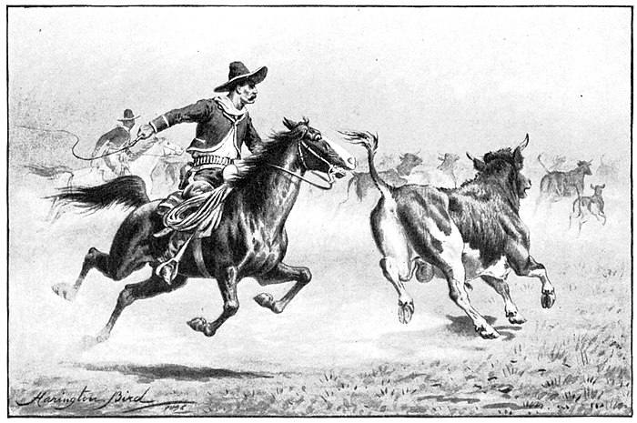 Man with whip on horse chasing steer