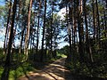 Zubtsovsky District, Tver Oblast, Russia - panoramio (34).jpg