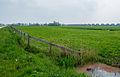 Zuidelijk deel wierde Friesestraatweg (1).jpg