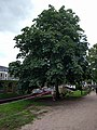 Zwolle bij Thorbeckegracht v2.jpg