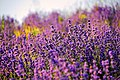 """""""Earth laughs in flowers"""" (EXPLORED) - Flickr - Jitabebe.jpg"""