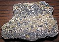 """Turritella Agate"" (chertified fossiliferous lacustrine limestone) (Laney Member, Green River Formation, Middle Eocene; southern Wyoming, USA) 2 (27416504768).jpg"
