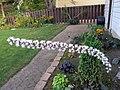 'Brunette' Bugbane Flowers (8226439724).jpg