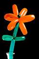 (345-365) Happy Flower (6244979900).jpg