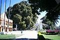 Árvore e Prefeitura.JPG