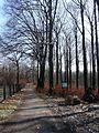 Łaziska Górne, Poland - panoramio (7).jpg