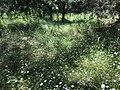 Алмазовский заказник. Обрыв на реке Хопёр у деревни Никольевка. Полянка.jpg