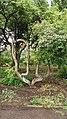 Ботанічний сад. Формування дерева.JPG