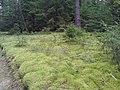 В лесу - panoramio (24).jpg